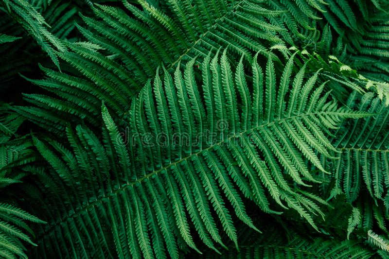 Fern green leafs royalty free stock images