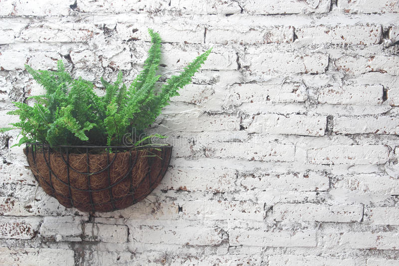 Fern green Plastered white walls royalty free stock image