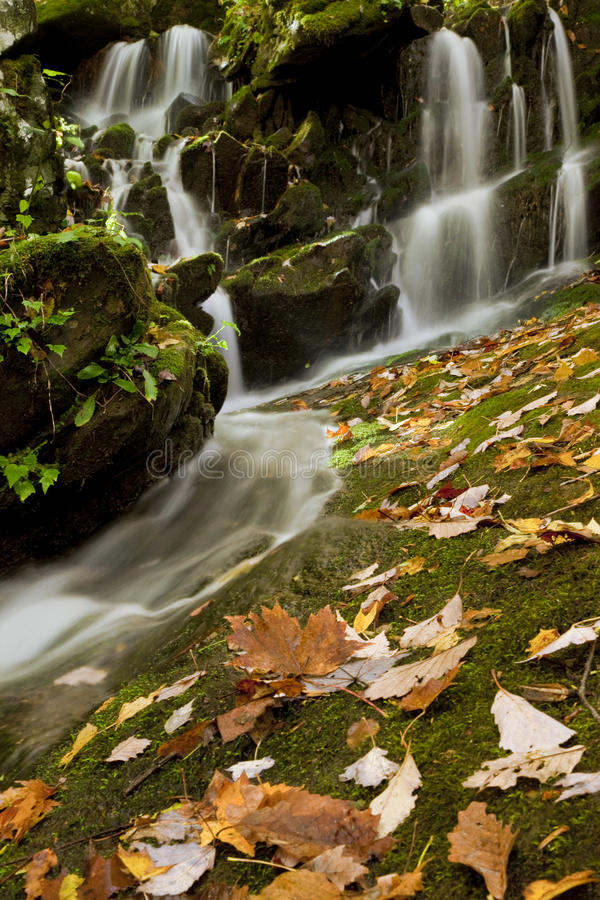 Free Fern Grotto Waterfall Stock Images - 11846394