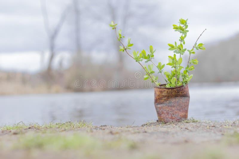Download Fern Growing Rusty Can stock afbeelding. Afbeelding bestaande uit klein - 54091971