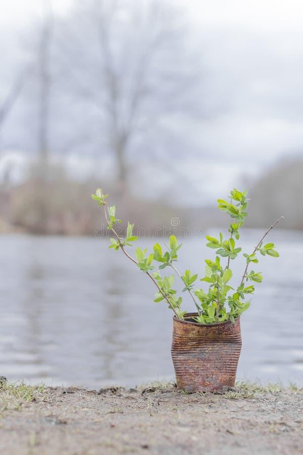 Download Fern Growing Rusty Can stock afbeelding. Afbeelding bestaande uit lakeside - 54091995