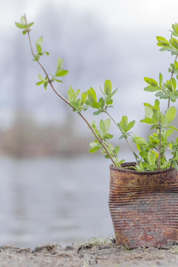 Download Fern Growing Rusty Can stock foto. Afbeelding bestaande uit growing - 54092006