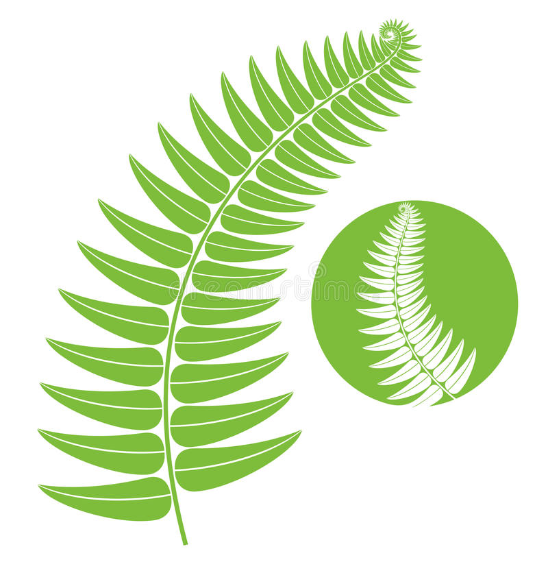 Fern. Isolated objects on white background. Vector illustration (EPS 10) stock illustration