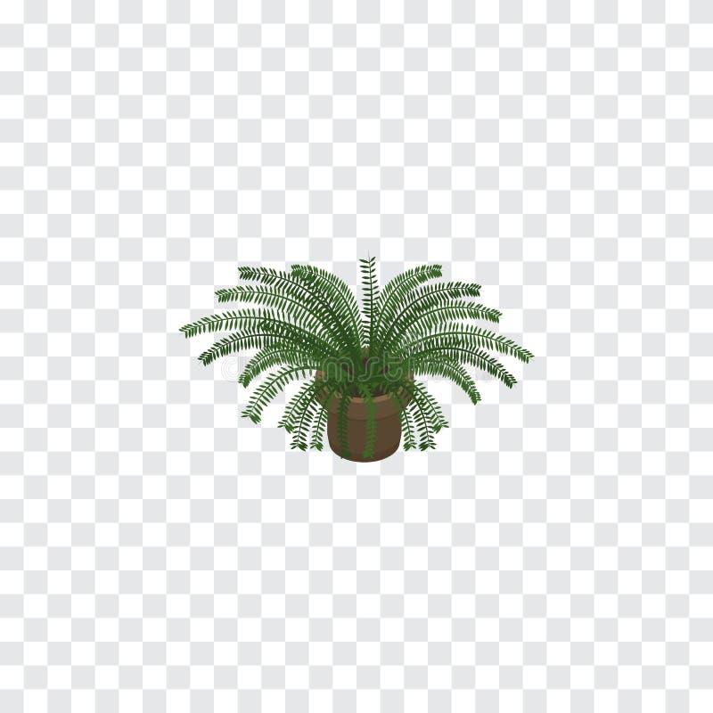Fern Isometric aislado El elemento del vector de la planta se puede utilizar para el helecho, planta, concepto de diseño del pote libre illustration