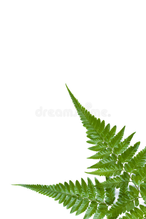 Download Fern Leaf 01 Stock Image - Image: 14682591