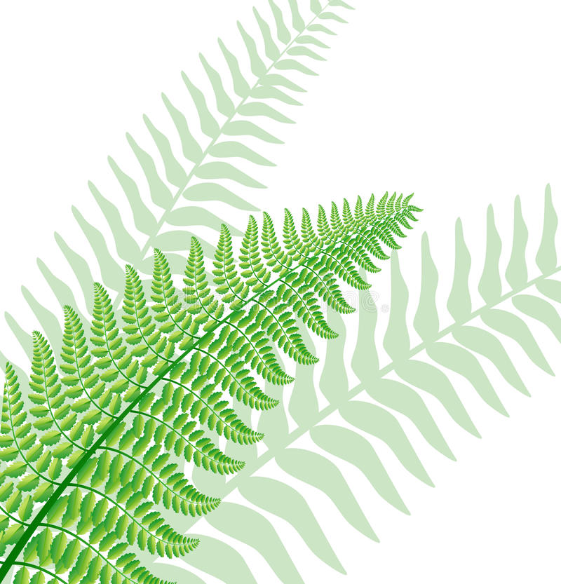 Fern leaf. Vector green fern leaf with background leaf silhouettes royalty free illustration