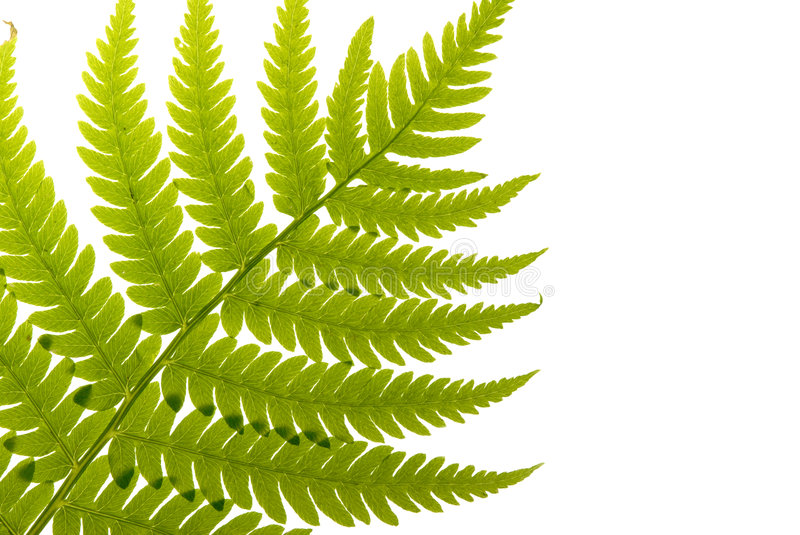 Download Fern Leaf stock photo. Image of green, greenery, leaves - 3096276