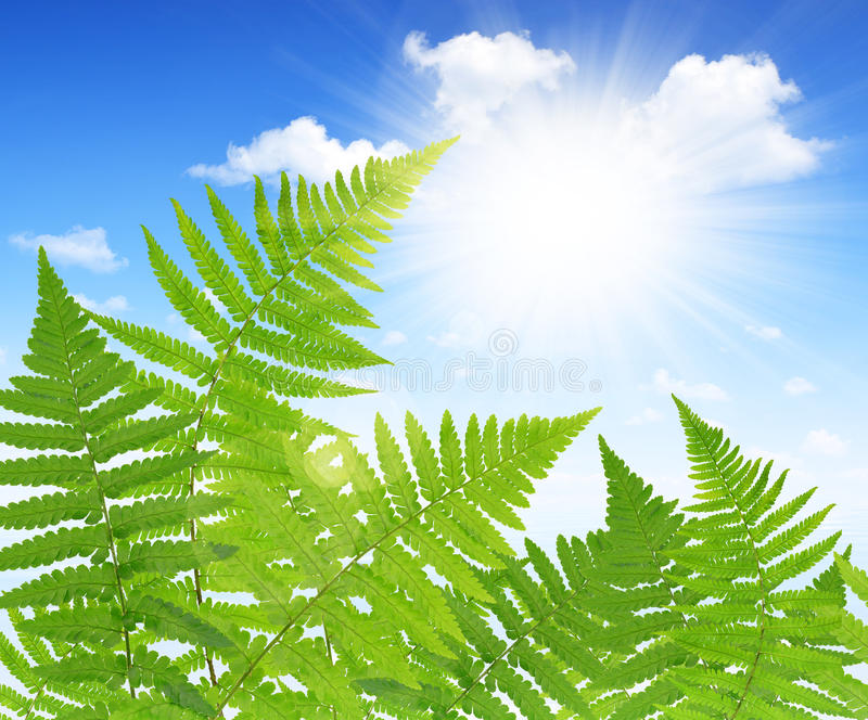 Download Fern Leaf fotografia stock. Immagine di sole, fogliame - 55359390
