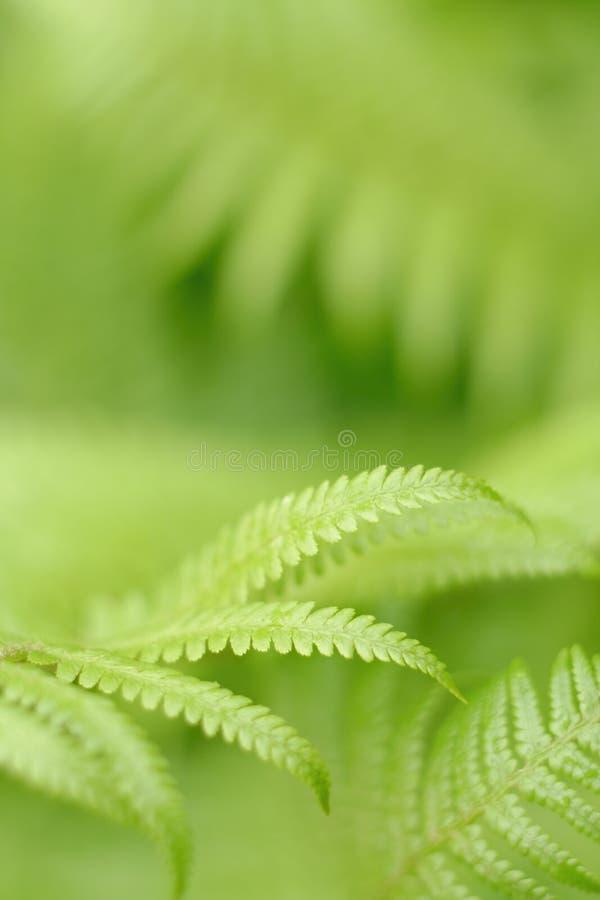 Free Fern Leaf Stock Image - 986221