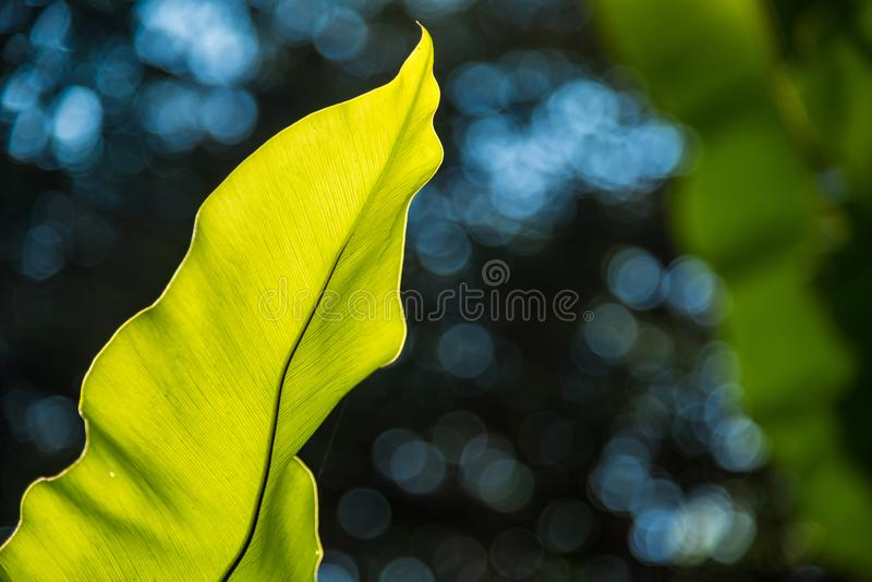 Fern leaf close-up on blurred dark green natural background.  stock photography