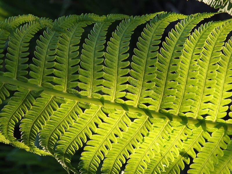 Fern Leaf Free Public Domain Cc0 Image