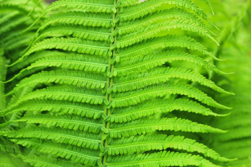 Fern leaf close up texture stock image