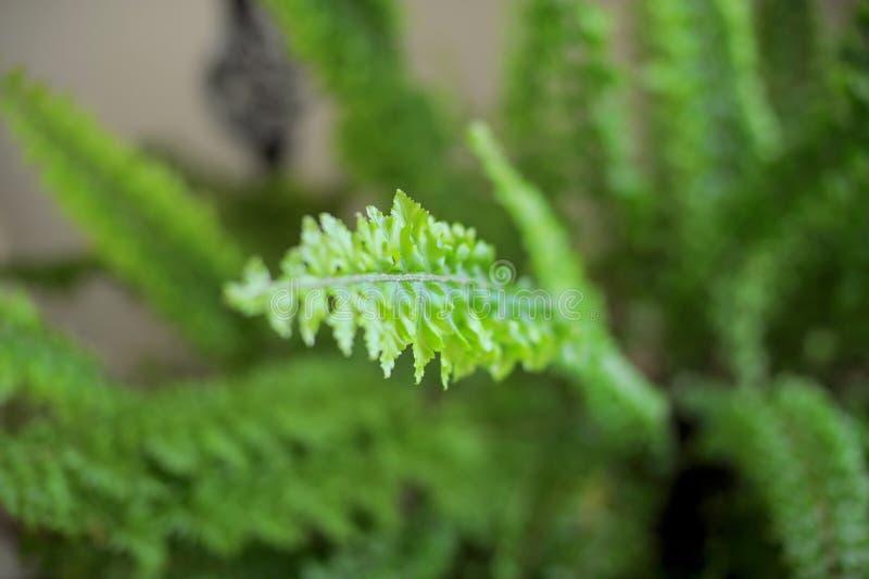 Download Fern Leaf stock image. Image of nature, ceremony, image - 30498177
