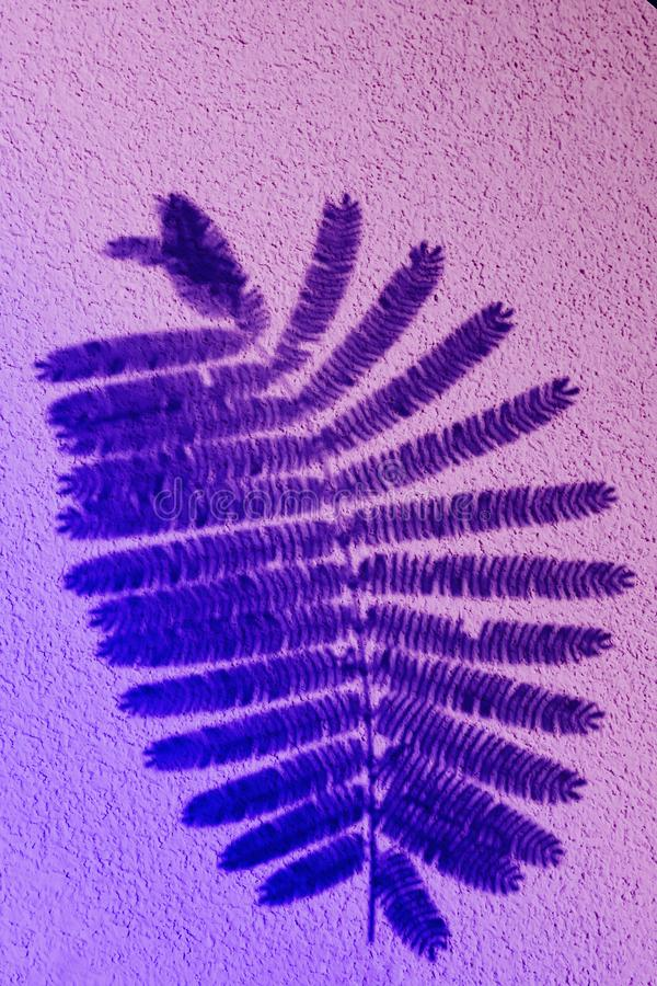 Fern leaf in color gradient.abstract leaves and shadow background.For create design layout, neon leaves composition. Neon leaves composition. Pattern made of royalty free stock image