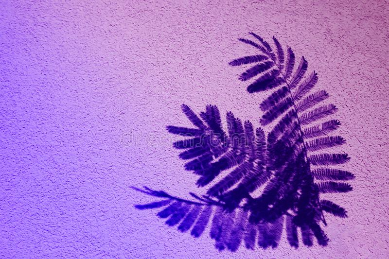 Fern leaf in color gradient.abstract leaves and shadow background.For create design layout, neon leaves composition. Neon leaves composition. Pattern made of stock photo