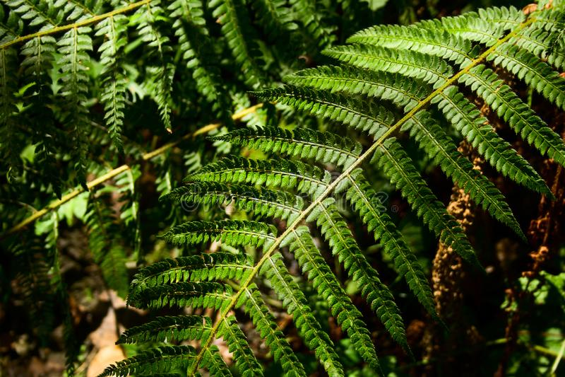 Fern leaf in the forest stock photo