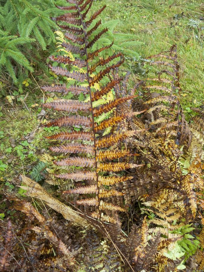 Fern leaf on a forest glade. royalty free stock image