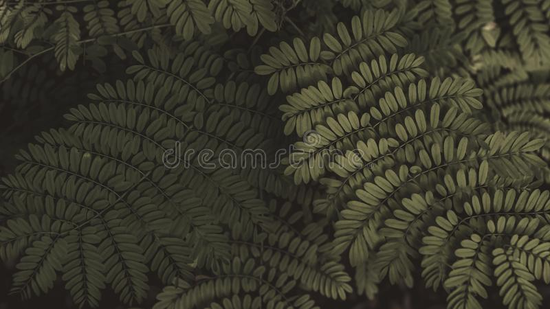 Fern leaf in the forest. Green fern leaves on dark backgound of shadow forest.  royalty free stock photos