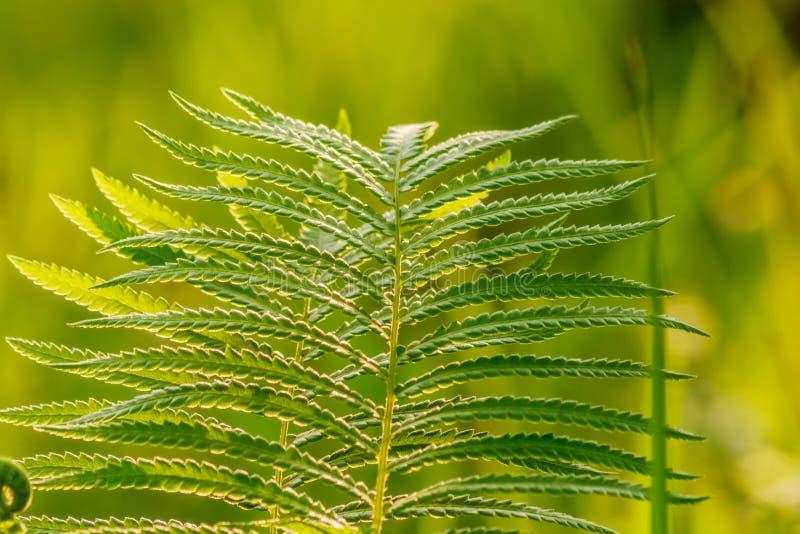 Fern Leaf On Green Garden Background. Stock Photo - Image of dark ...