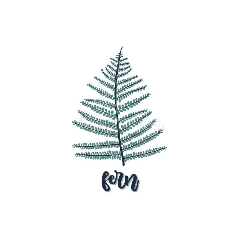 Fern leaf isolated on white background. Fern leaf isolated on white background with caption - fern. Vector illustration in trendy style stock illustration