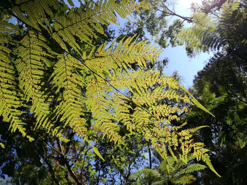 Fern leaf in nature. Fern, leaf, nature, blue, sky, background stock images