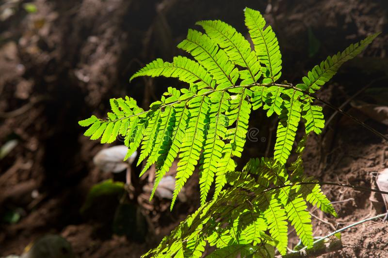 Fern leaf with perfect shard light shadow stock photography