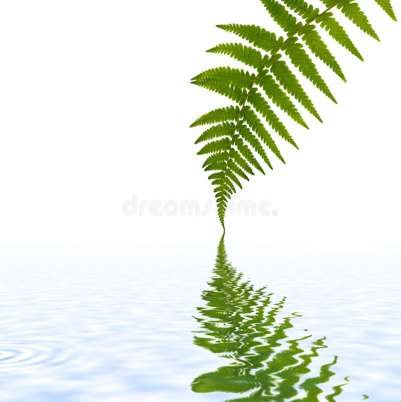 Fern Leaf Simplicity royalty free stock image