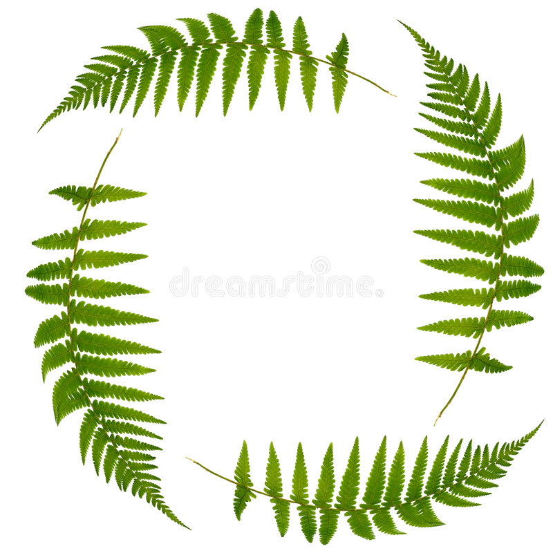 Download Fern Leaf Symbol stock photo. Image of nature, four, environment - 6825988