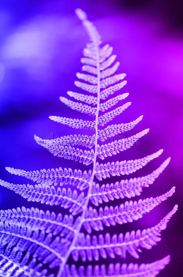 Fern leaf texture in sunlight. Green leaves abstract nature background. Close-up. Trendy neon stock image