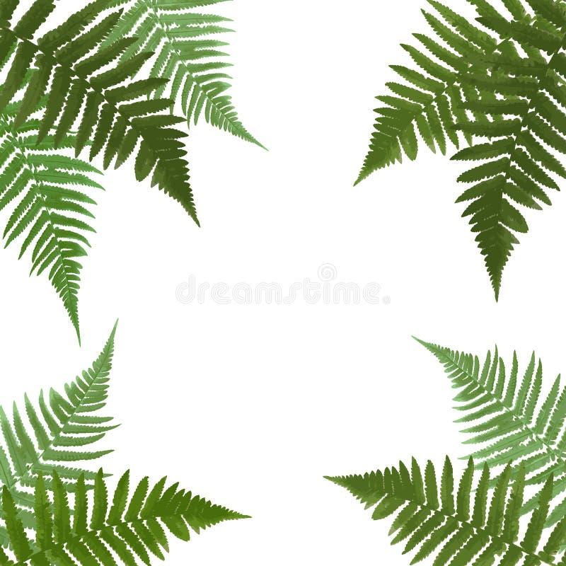 Fern Leaf Vector Background con el ejemplo blanco del marco stock de ilustración