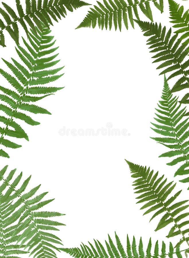Fern Leaf Vector Background Illustration ilustración del vector