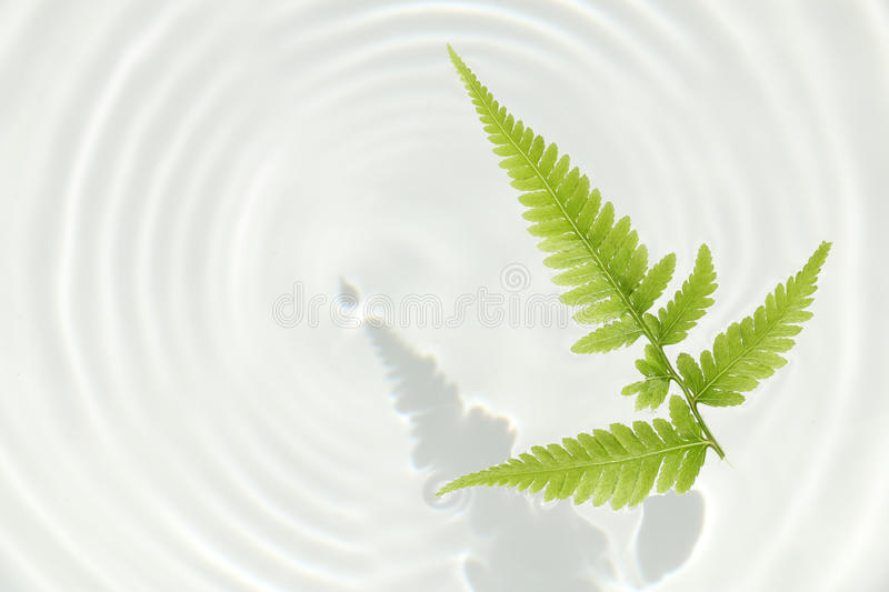 Fern leaf and water ripple background stock photo