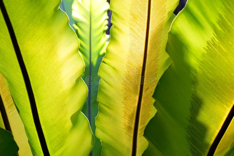 Fern leafs with raining in tropical rainforest. stock photo