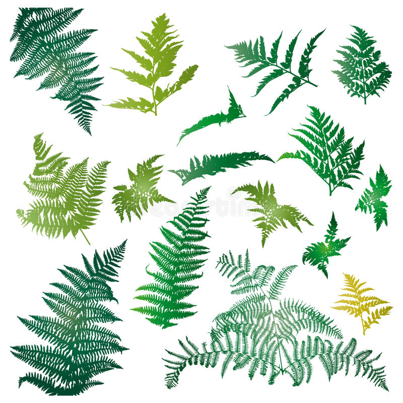 Fern leaves. Illustrated in a set of design elements stock illustration
