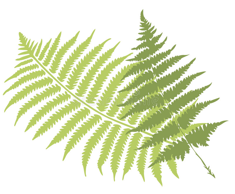 Fern leaves. Green fern leaves vector illustration royalty free illustration