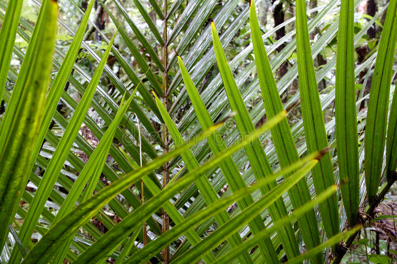 Download Fern Leaves Stock Image - Image: 22640441