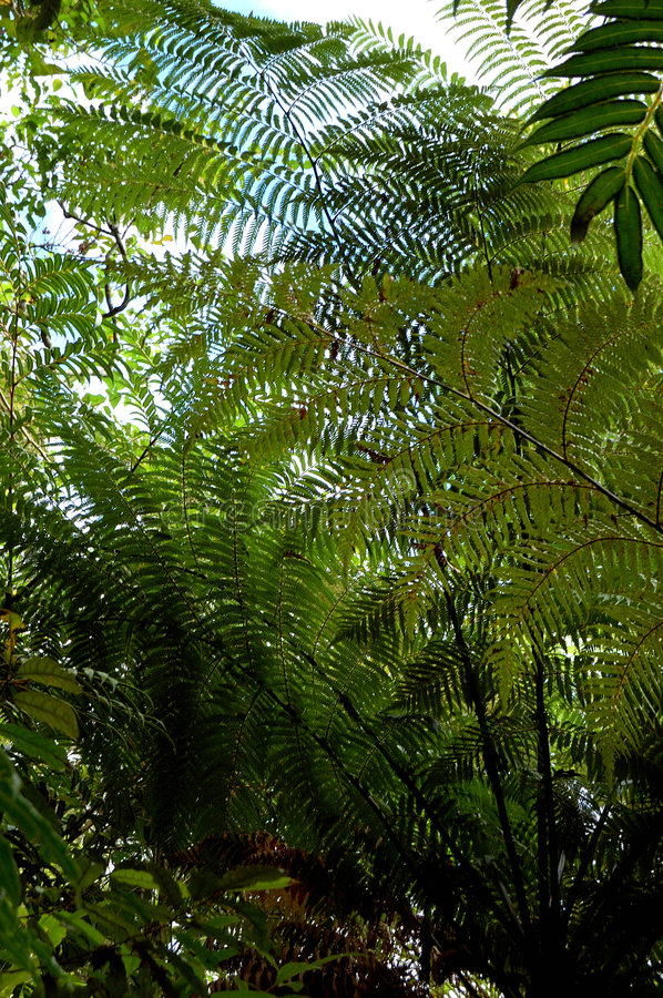 Free Fern Leaves Stock Photography - 3246212