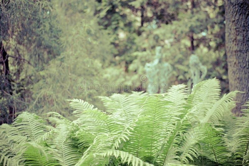 Fern Leaves fotografia stock