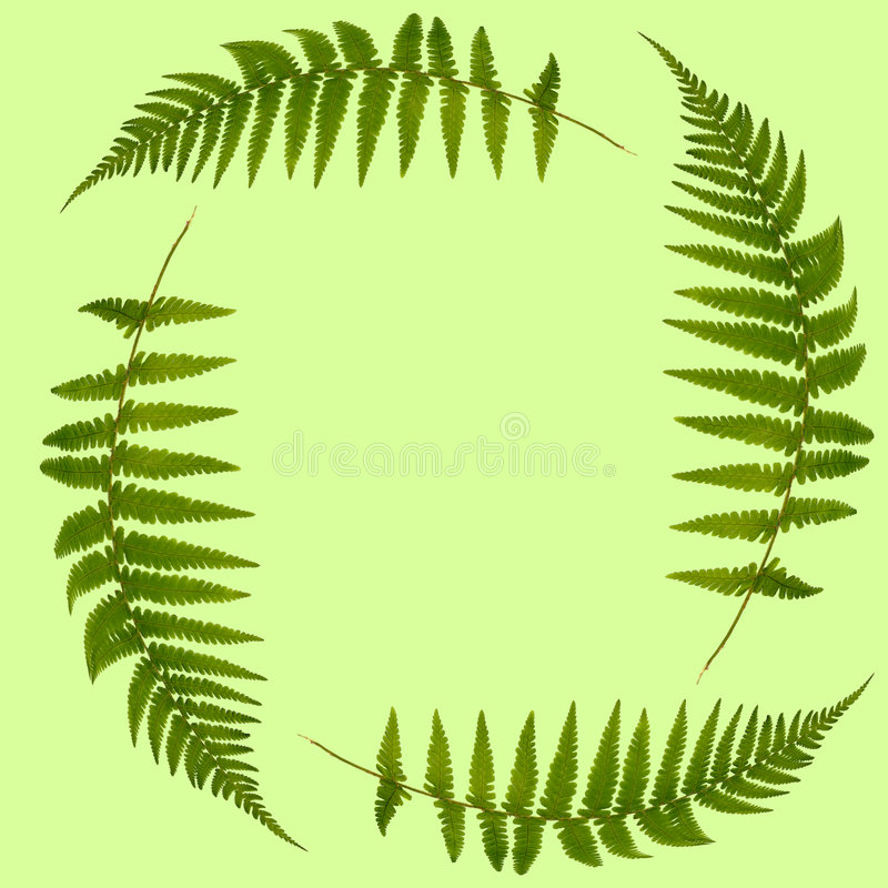 Fern Leaves Stock Image