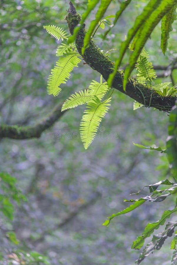 Fern Leaves stock afbeelding