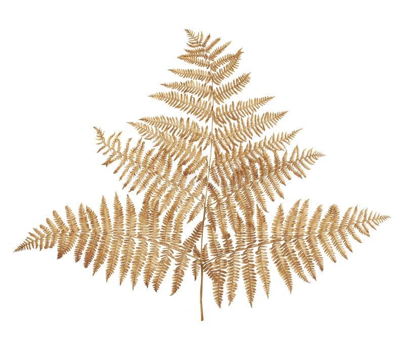 Fern Leaves immagine stock libera da diritti