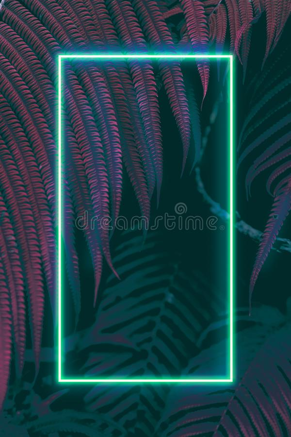 Fern leaves with colorful neon light, free space for text. Real zise royalty free stock photos