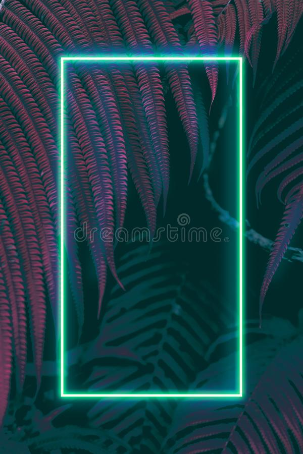 Fern leaves with colorful neon light, free space for text. Real zise royalty free stock images