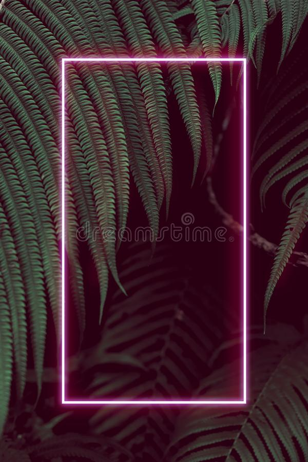 Fern leaves with colorful neon light, free space for text. Real zise stock photography