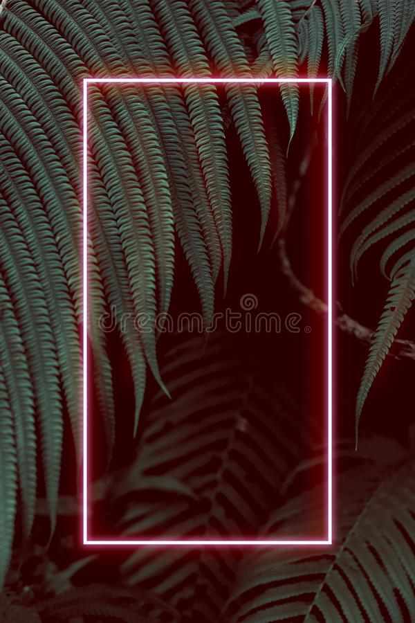 Fern leaves with colorful neon light, free space for text. Real zise stock photo