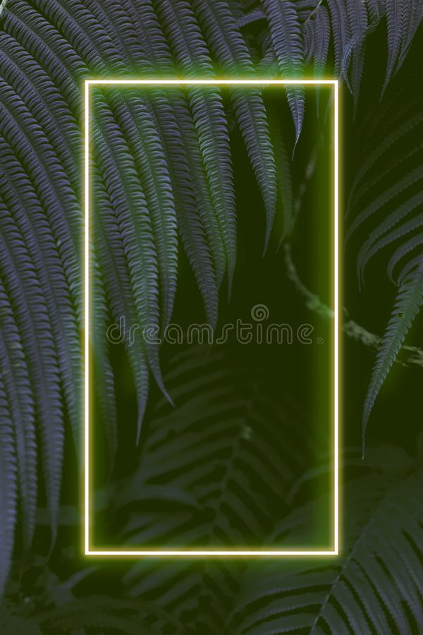Fern leaves with colorful neon light, free space for text. Real zise stock image