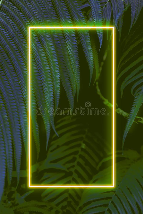 Fern leaves with colorful neon light, free space for text. Real zise stock images