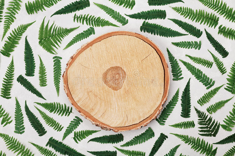 Fern leaves and cross section of birch trunk on gray background top view. Flat lay styling. Fern leaves and cross section of birch trunk on gray background top stock images