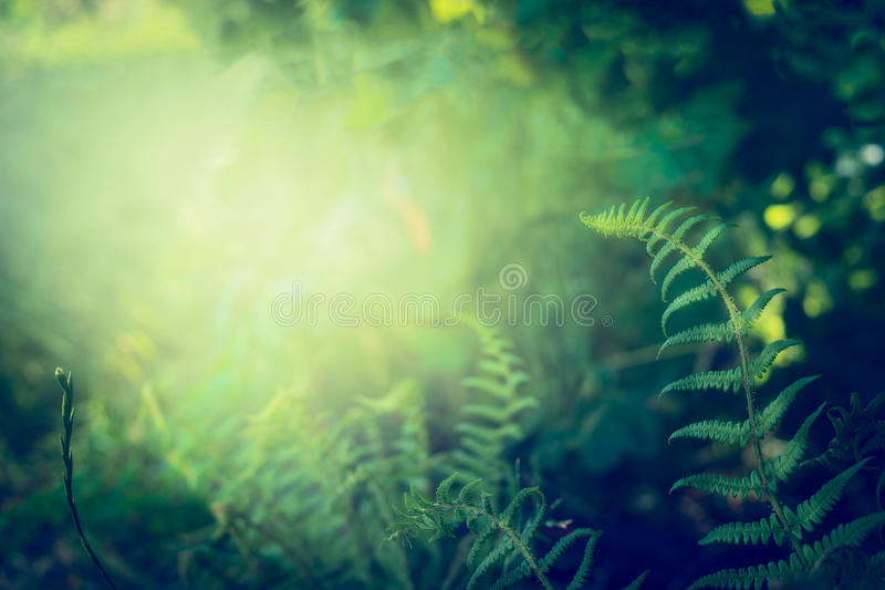 Fern leaves on dark jungle or rainforest nature background stock photography