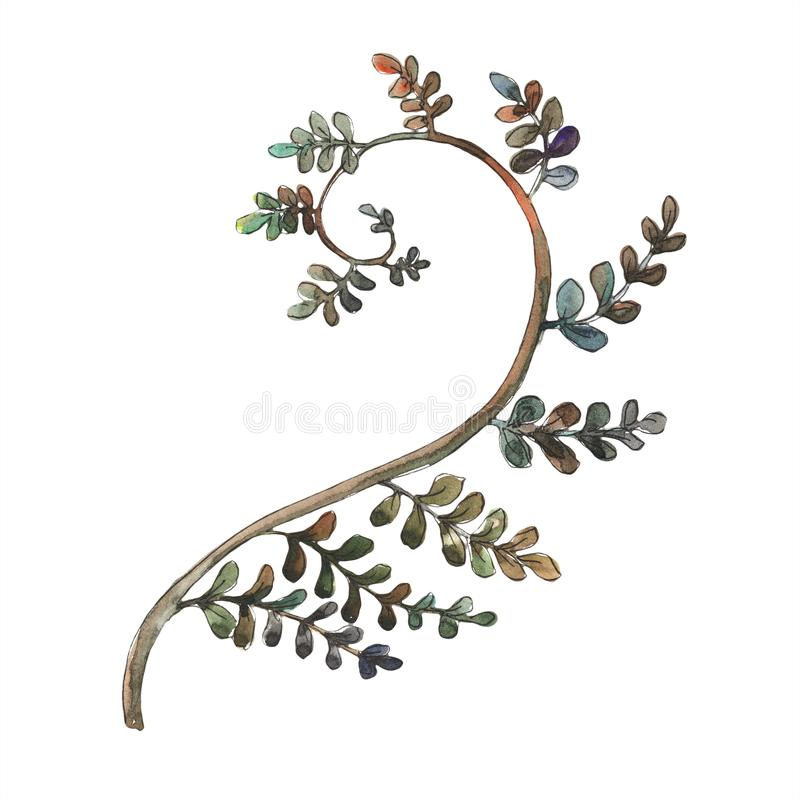 Fern Leaves Feuillage floral de jardin botanique d'usine de frein de feuille Élément d'isolement d'illustration illustration de vecteur